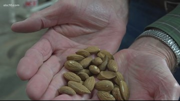 'We're headed in the right direction' | Almond growers react to trade deal signed this week