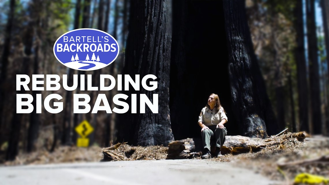 Big Basin State Park still recovering one year after CZU Complex Fire