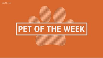 Pet of the Week: Aster