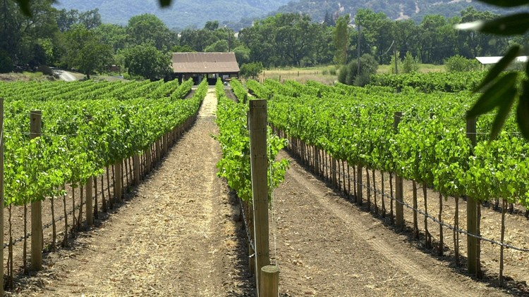 As the wine country's busy season, April through October, begins, folks in the wine and hospitality business say they're optimistic. They stressed that damage to the wine industry overall was relatively small, that the Northern California wine country is uncorked and ready to pour.