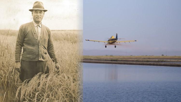 The legacy of California rice farming at Koda Farms