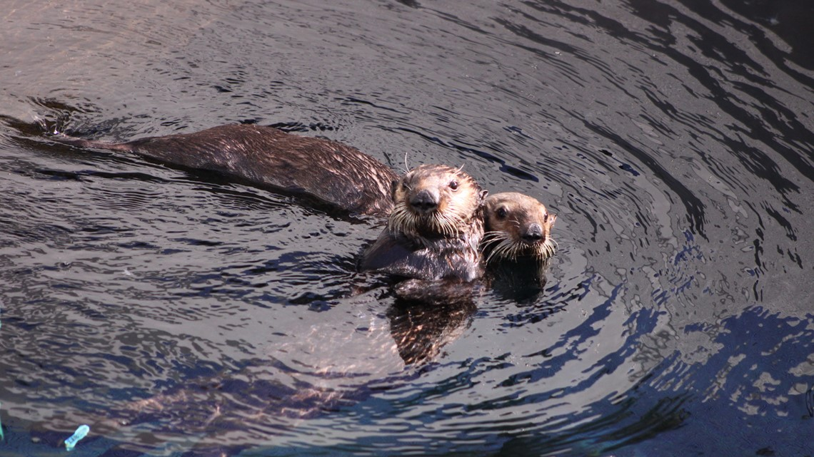 Oakland Gas Prices >> The Marine Mammal Center needs your help naming their new ...