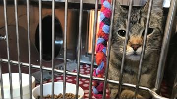 Meet the department working to stop animal cruelty