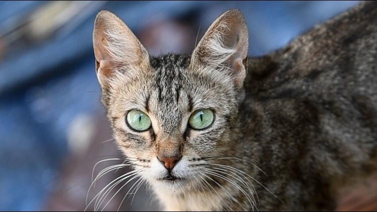 Rumors of a serial cat killer at large in the Sacramento area are swirling on sites like Reddit and Nextdoor, but law enforcement and animal control authorities say they are just that: unfounded rumors.