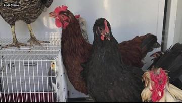 Animals found malnourished, dead in Lodi home