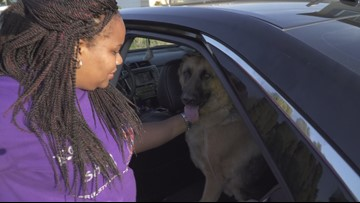 Fairfield comfort dog, presumed stolen from veteran, found