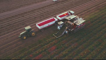 Why modern machines are key to harvesting California food