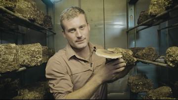 DIY mushrooms are like a farm in a box