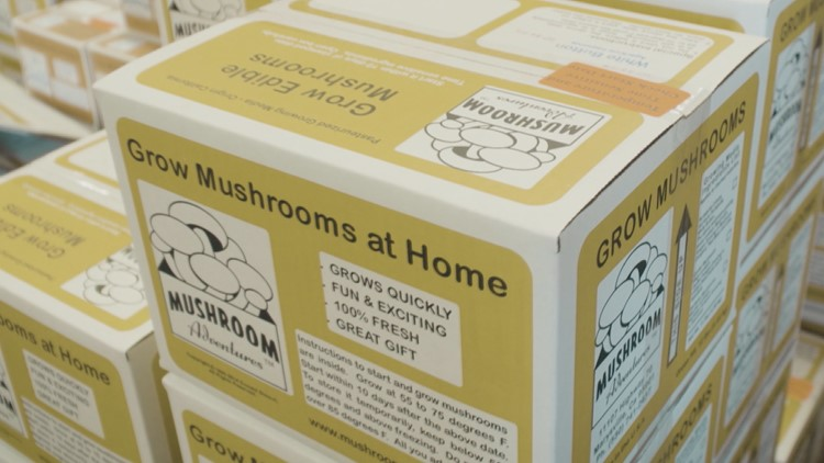 Mushroom Man 1.tif.jpg