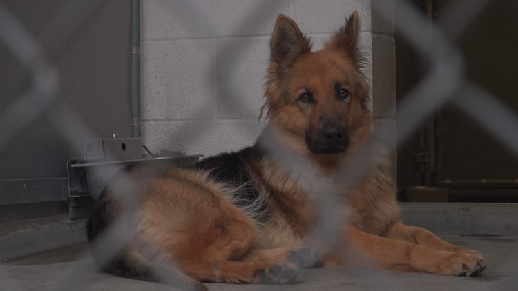 Sacramento animal shelters will waive lost pet fees following Fourth of July