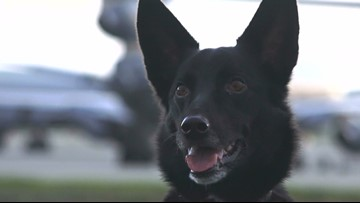 From rescue dog to Air Force safety dog: How Otto is stealing hearts and saving lives