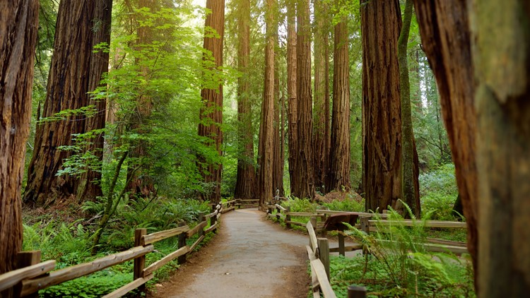 National Parks waving entry fees August 25