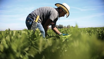 San Joaquin Valley farmers hoping Trump's water policy would end 'water grab'