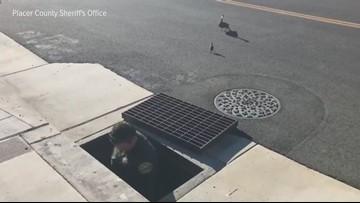 Ducklings rescued by deputies in Auburn