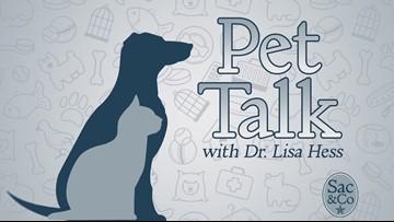 Sac&Co: Pet Talk with Dr. Lisa Hess