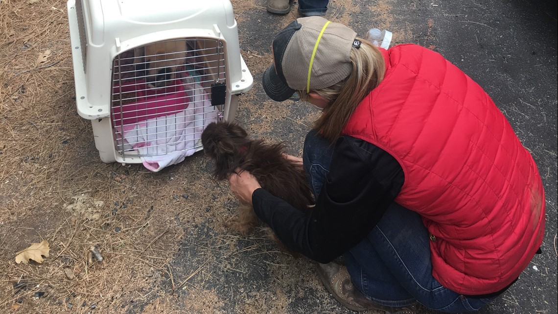Animal rescue teams racing against the clock to save starving animals from the Camp Fire