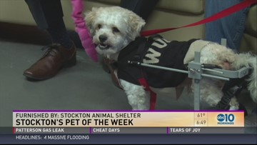 Stockton's Pet of the Week | abc10 com