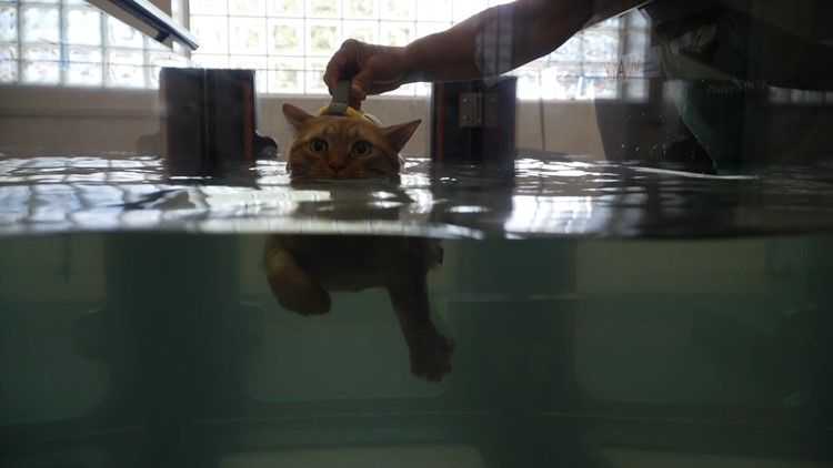 Helping a special cat swim to recovery