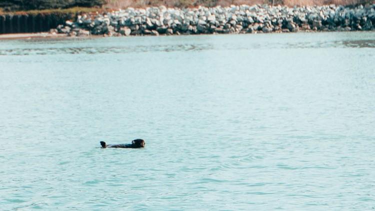 Sea otter_Bartell's Backroads