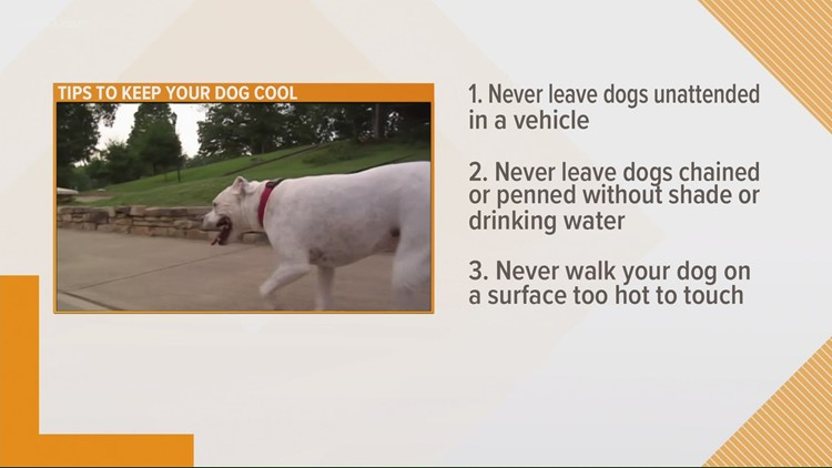 On National Hotdog Day, we tell you hot to keep your hot dog safe