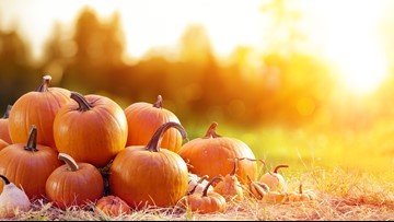 Apple Hill alternatives: 5 other ways to have fun in fall