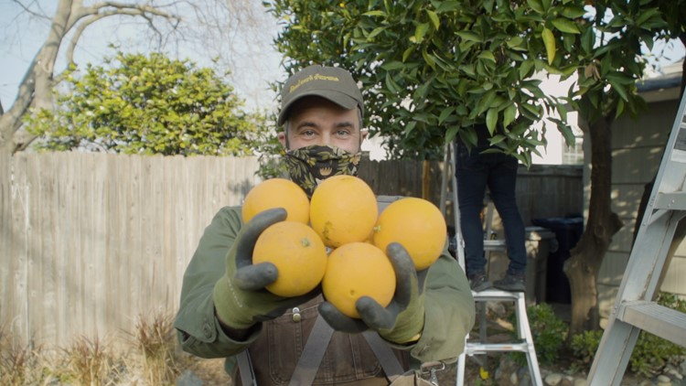 This Sacramento man is picking 'unwanted' fruit to curb hunger | NorCal Strong
