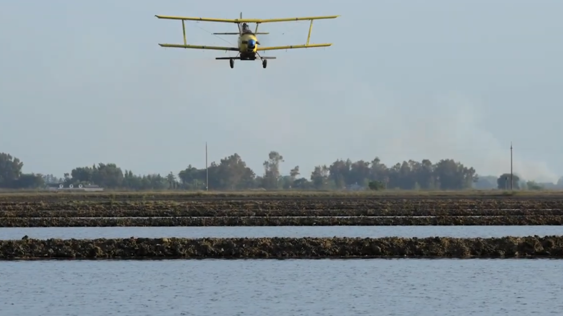 Amid worsening drought, California rice growers to cut back