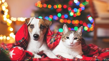 Pets as Christmas gifts: Why shelters say it's OK to give a pet as a gift
