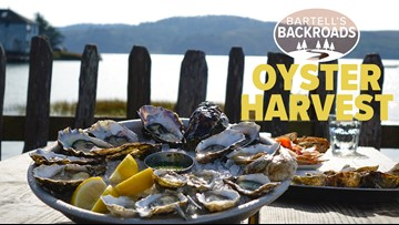 Oyster harvest is in full effect at Tomales Bay's Hog Island Oyster Company | Bartell's Backroads