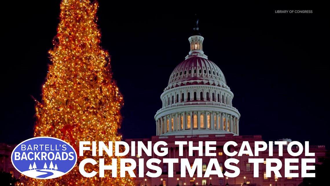 California was chosen to provide the Christmas tree for the U.S. Capitol. Meet the man who found it.