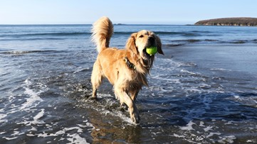 How to keep your pets safe from harmful blue-green algae