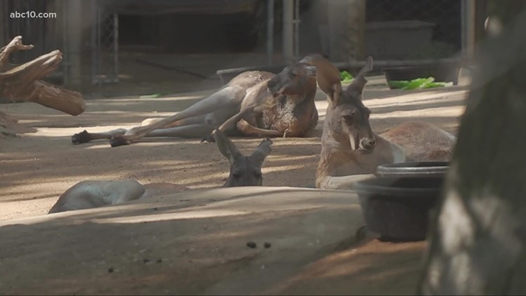 Sacramento Zoo in negotiations to relocate to Elk Grove