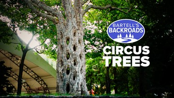 'Circus Trees' will leave you wondering, 'How did they do that?'