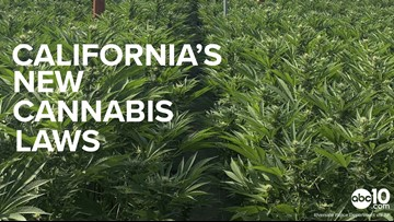2019 New Laws: California's new cannabis laws, explained