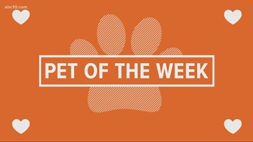 Pet of the Week: Louie