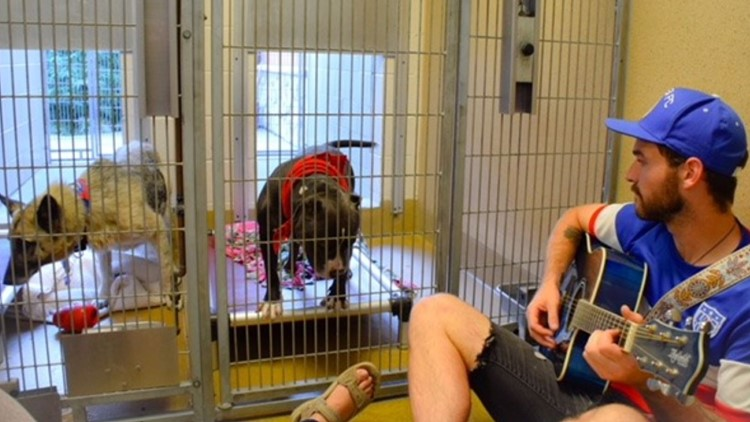 Sacramento animal shelter seeking volunteers to read, sing to animals during Fourth of July fireworks