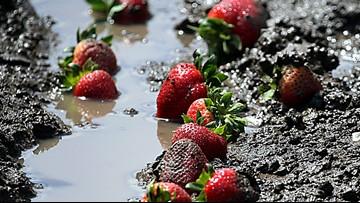 Wet spring delays California crops