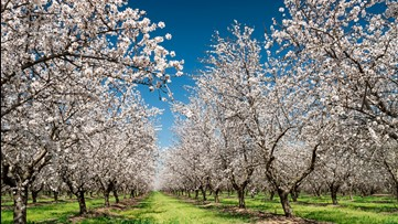 An orchard selfie could cost you $1,000, Solano County Sheriff says