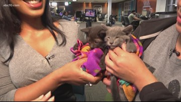 Pets of the week: Kittens Zoomer and Binx looking to be adopted together
