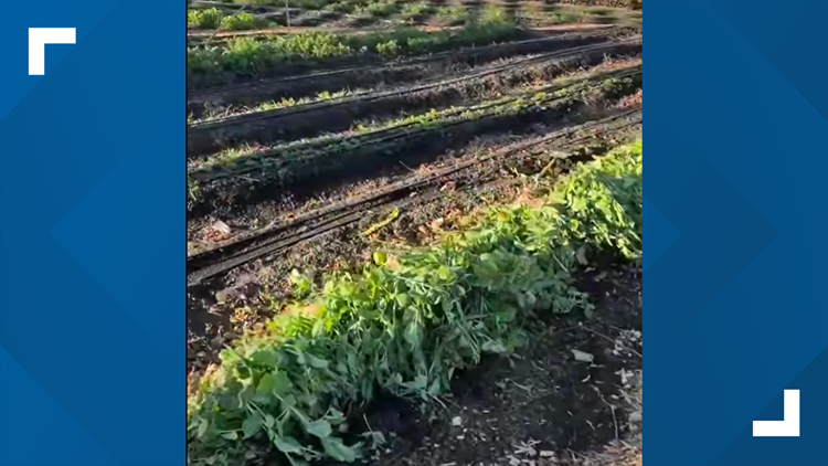 Owner of West Sacramento community garden dealing with aftermath of sideshow