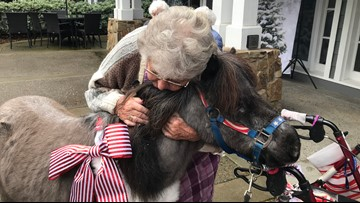 Mini horses visit seniors at Carmichael nursing home on Christmas Day