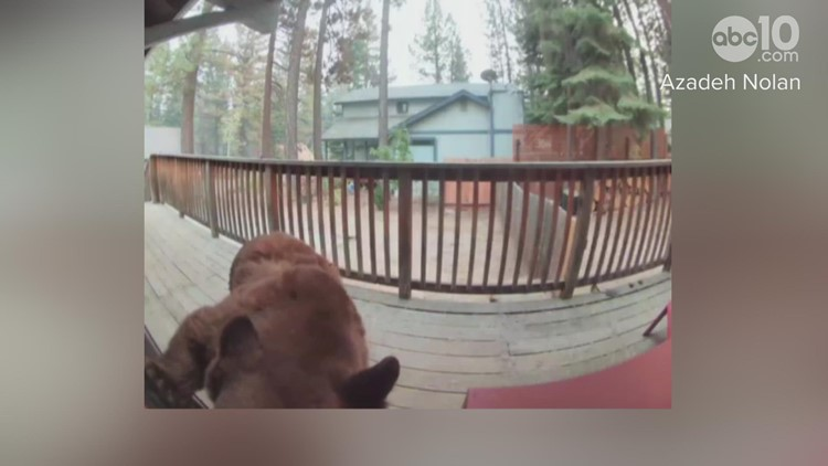 A family of bears appears on a doorbell camera in South Lake Tahoe