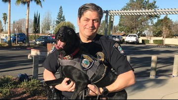 Meet 'Farley' the Citrus Heights K9 with a stellar sniff record