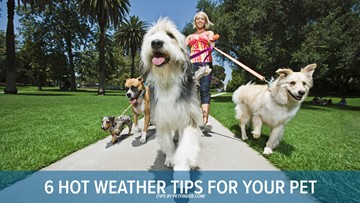 Tips for caring for your pets in hot weather