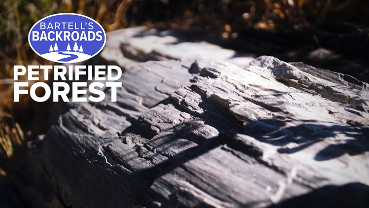 The world's biggest petrified trees are a day trip away in Napa Valley | Bartell's Backroads