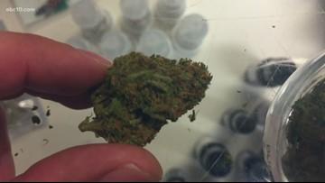 Trending News: Nevada bans pre-employment marijuana testing