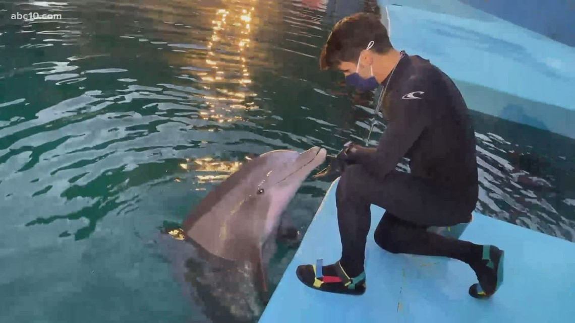 Watch what happens when Mark S. Allen tries to get a 'dolphin kiss'