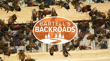 This small California town is the queen bee capital of North America | Bartell's Backroads