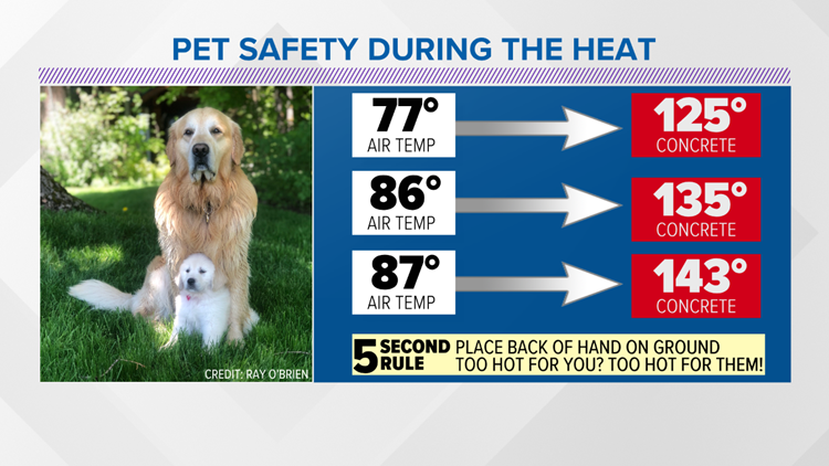 6 tips to keeping your pets safe during the dog days of summer