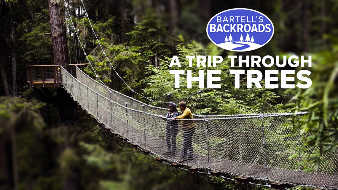 Experience the 'wood wide web' of the Redwood Sky Walk | Bartell's Backroads